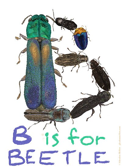 B is for Beetle by Glendon Mellow