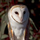 Barn Owl up close by Kerryn Ryan, Mosaic Avenues