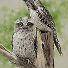 Tawny Frogmouths by Heidi Schwandt Garner