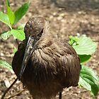 Feathered Friend by MyPixx