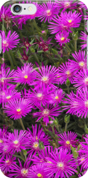 Purple Sping Flowers by Curtis Ventresca