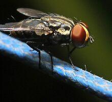 Drying a fly by budafacu
