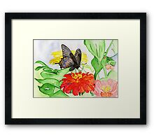The New Creation….the Black Swallowtail Butterfly Framed Print