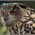 Eagle Owl (Bubo bubo)  by alan tunnicliffe