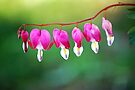 Bleeding Hearts  by Tori Snow