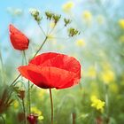 Technicolour Poppy by Donna-R
