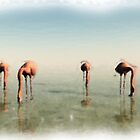 Flamingoes by Leoni Mullett