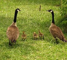 Taking a Family Stroll by Ron Russell