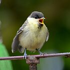 The worlds cutest baby bird by Nicole W.
