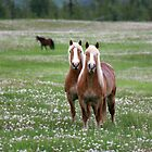 Twin Belgian Horses by blueinfinity