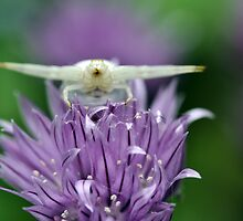 Crab Spider on Chive by Astrid Ewing Photography