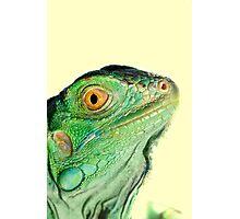 Iguana head Photographic Print