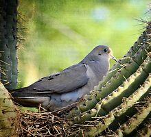 Mourning Dove in the Morning  by Saija  Lehtonen