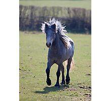 Eriskay Pony Photographic Print
