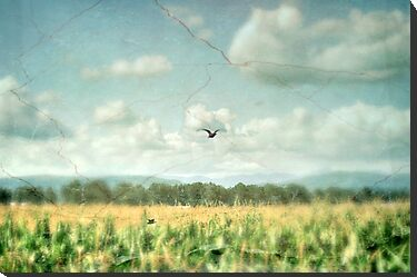 Summer Corn by Annie Lemay  Photography