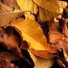 Autumn Leaves by Hannah Ruth