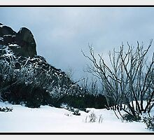 Winter's Embrace, Mount Buffalo VIC by Chris Munn