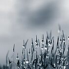 Drops of nature by Annie Lemay  Photography