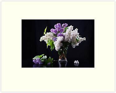 Still life of purple and white lilac in glass vase by torishaa