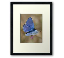 Common Blue Framed Print