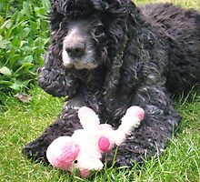 Cocker Spaniel and Toy by J Bonanno