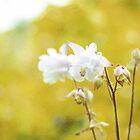 Spring Romance by BPhotographer