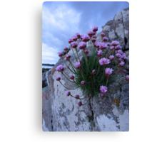 sea pink Canvas Print
