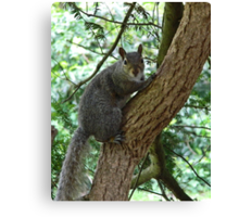 Grey Squirrel (oil painting effect) Canvas Print
