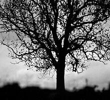 Tree, Southern Upland Way, Scottish Borders by Iain MacLean