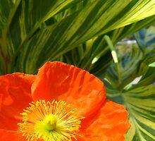 Poppy Goodness... by LindaR