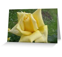 Yellow roses, delicate roses Greeting Card