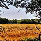 Golden Field by aprilann