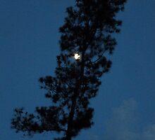Pine Tree Moon By Jonathan Green by Jonathan  Green
