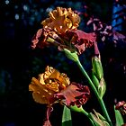 Rusty Petals by Jo-Anne Gazo-McKim