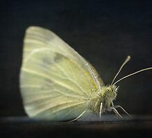 A moth on my windowsill by Clare Colins