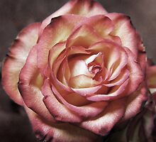 my rose by Linda  Makiej