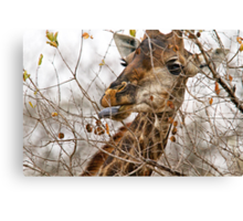 Just A Little Farther Canvas Print