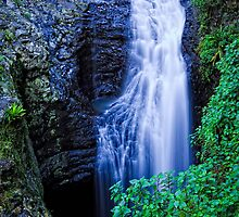Springbrook National Park, Queensland by burrster
