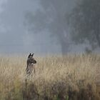 Kangaroo's in the Mist by Saraswati-she