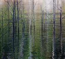 Ripples and Reflections by Jill Fisher