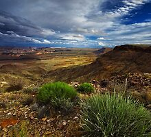 Afternoon in the Canyon by Jill Fisher