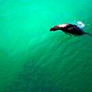 Sea Lion: Galapagos by Nick  Taylor
