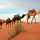 Camel Train, Sahara Morocco by Debbie Pinard