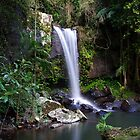 Curtis Falls - Mount Tamborine by Greg Thomas