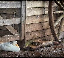 Sleeping Duck by Margaret Metcalfe