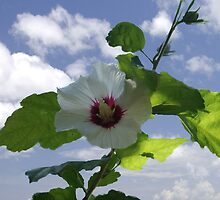 Rose Of Sharon by Rick  Friedle