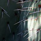 Prickly Pear Needles by Julia Washburn