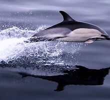 Flying Porpoise by Rob Hawkins