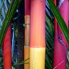Stick Palm Tree Trunks, Sabah, Malaysia by ange2
