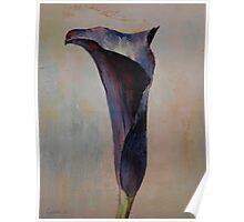 Black Calla Lily Poster
